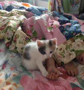 Кошечка ищет дом.