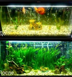 Услуги по оформлению и обслужеванию аквариумов