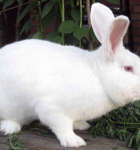 Подарю кролика срочно
