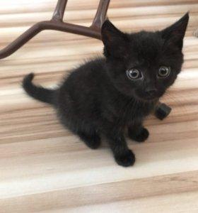 Котенок (девочка)