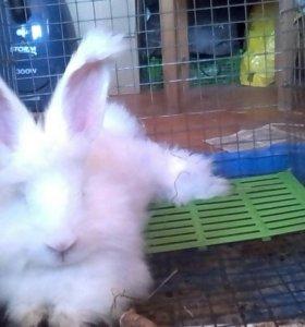 В помощь кроликам