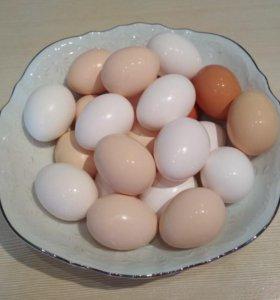 Яйца домашние, куриные.