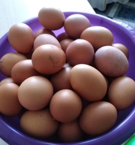 Яйцо домашнее (Куриное)