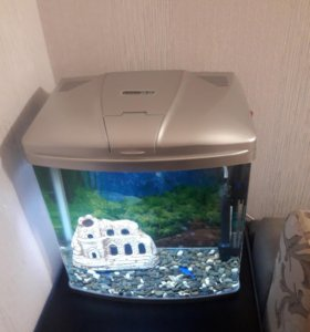 Аквариум 30 литров с рыбкой цихлозома