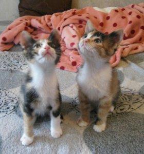 Кошечки-сестрички в добрые руки
