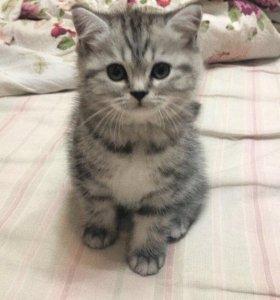 Малыши-котята