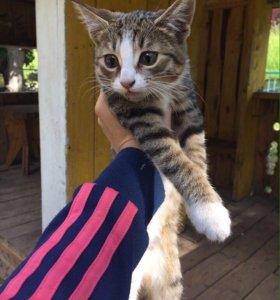 Найдена котёнок