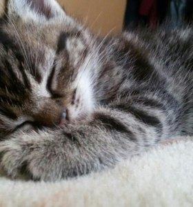 Котята (1.5 месяца)😽