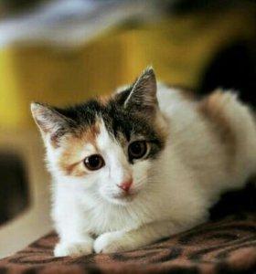 Котёнок Ася
