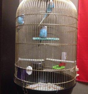 3 попугая с клеткой