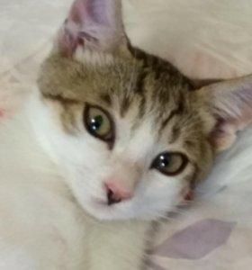 Котенок 4месяца