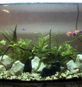 Камни для аквариума