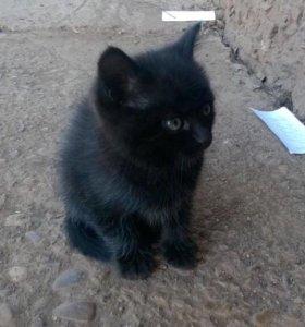 Котёнок (мальчик) в добрые ручки!