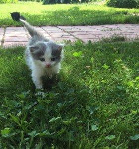 Котята серый, найден в трубе мальчик в добрые руки