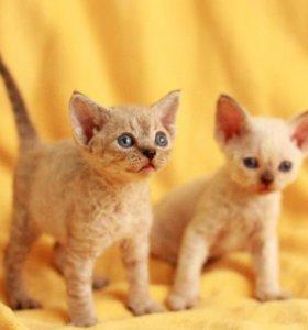 Котики  и кошечка черная 6м