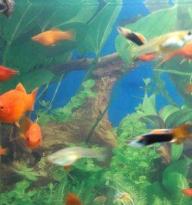 Аквариумные рыбки. Оптом.