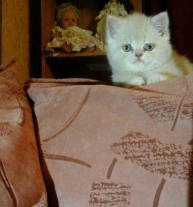 Котята не дорого! Возможен торг!