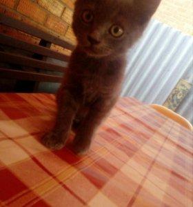 Здравствуйте)))) Продаем котенка)