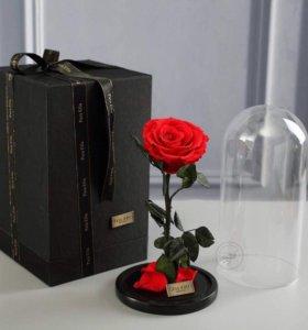 Живая роза в колбе. Не вянет 5 лет. Гарантия.