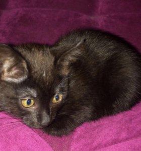 Котенок- подросток (девочка), возраст 5 мес.