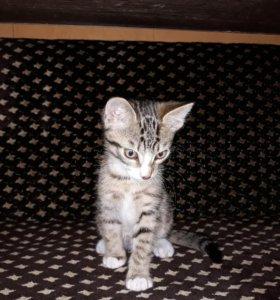 Отдам котёнка (мальчик)