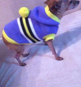 Одежда для маленьких собак.