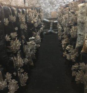 Готовое грибное производство