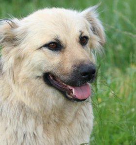 бывшедомашняя собака в дар (девочка)