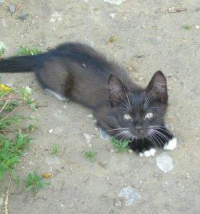 Котенок Миша ждет новый дом