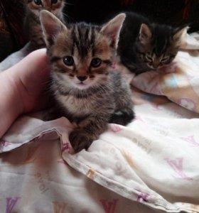 Милейшие котята в добрые руки