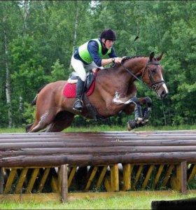 Лошадь Тракененский мерин