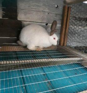 Падрощенные кроли и крольчихи!
