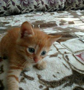 Рыжий котенок мальчик в добрые ручки
