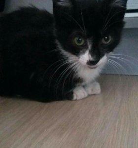 Котёнок мальчик 1.5 мес