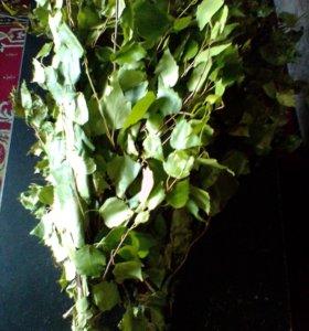 Веники для бани,березовые