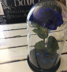 Роза в колбе премиум синяя