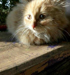 котёнок,девочка,рыжая,зовут Лиса.