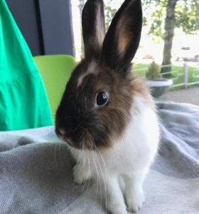 Кролик в добрые руки