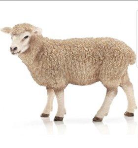 Быки и овцы