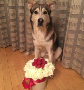 Букет из 21 белой розы в шляпной коробке с клубник