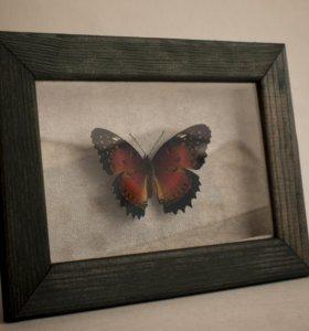 Бабочка Cethosia biblis в рамке