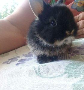 Продаю декоративных крольчат, 3 недели им