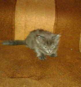Котенок девочка