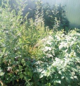 Покос травы и бурьяна в Каширском районе.