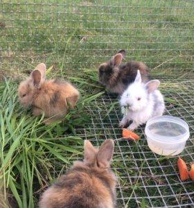 Дек. Кролики