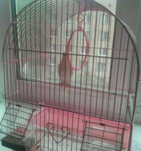 Клетка без попугая