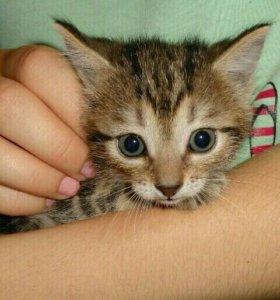 Крошка Котёнок