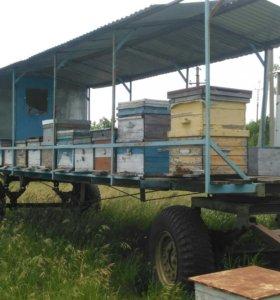 Платформа для пчел