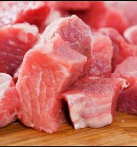 Мясо телятина,бычки 1 год