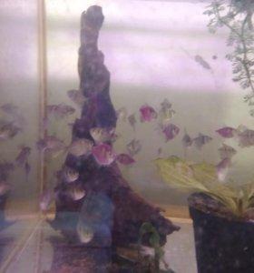 Рыбки своего разведения